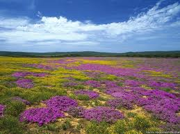 EasternCape_-_Flowers
